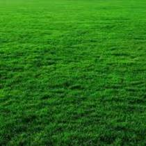 Рулонные газоны позволяют максимально быстро облагородить территорию