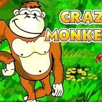 Слот Crazy Monkey обретает большую популярность в последнее время